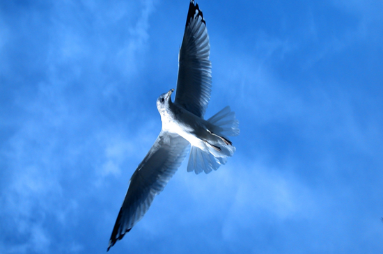 Soaring Above Your Challenges ~ The Gift of Metaview
