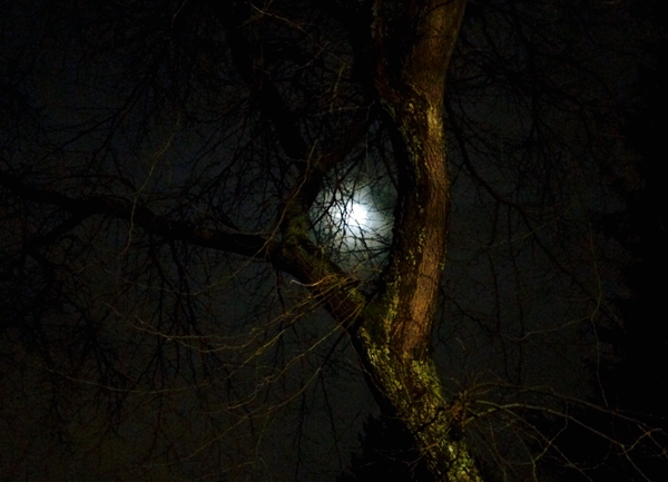 The Moonlit Forest Path of Inquiry ~ 8 Questions to Nurture the Heart and Creativity of Children