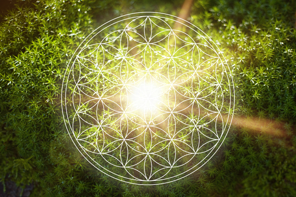 Activating Light Codes — The Genetic Seeds of Your Soul's Cosmic Garden